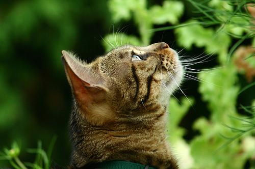 conscious cat