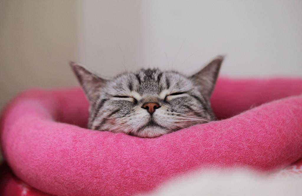 selflove_cat
