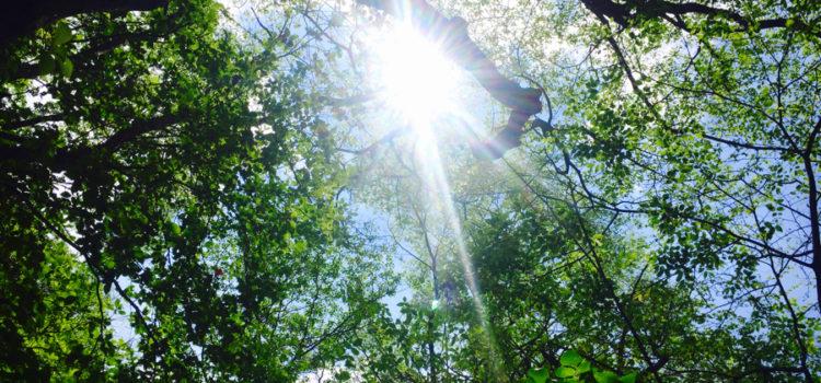 夏至の太陽
