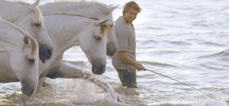 ホース・ウィスパラー〜馬にささやきかける人