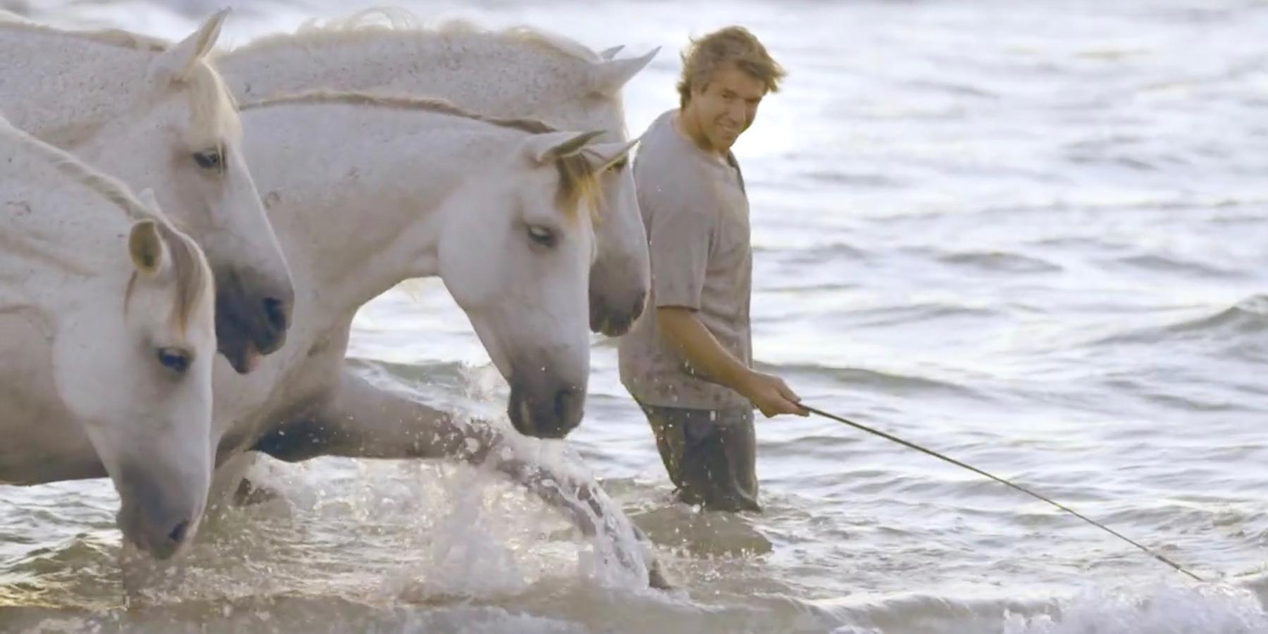 horse-whispere
