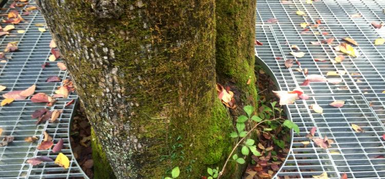 秋の軽井沢にてハートのワーク