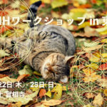 The cat lies on the fallen yellow leaves